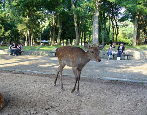 奈良公園の鹿の画像